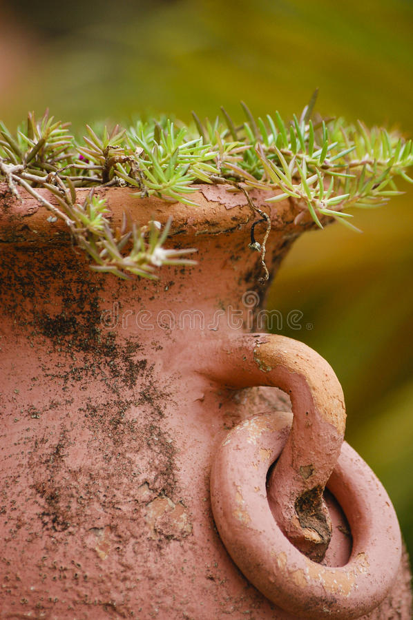 Vaso di terracotta con i rosmarini fotografie stock
