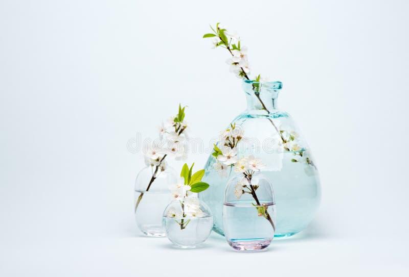 Vaso di vetro con i fiori bianchi di fioritura della ciliegia fotografie stock libere da diritti
