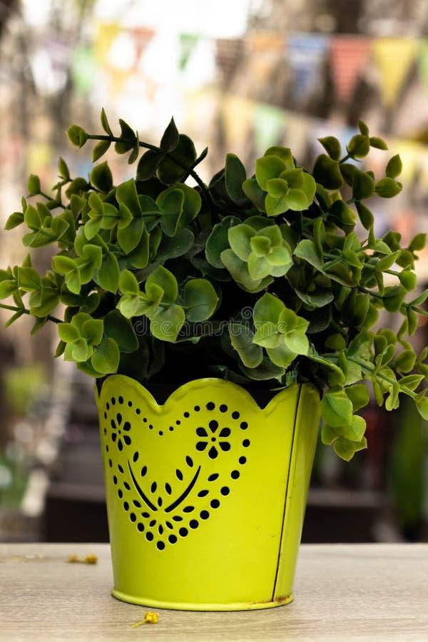Vaso giallo con la pianta fotografie stock