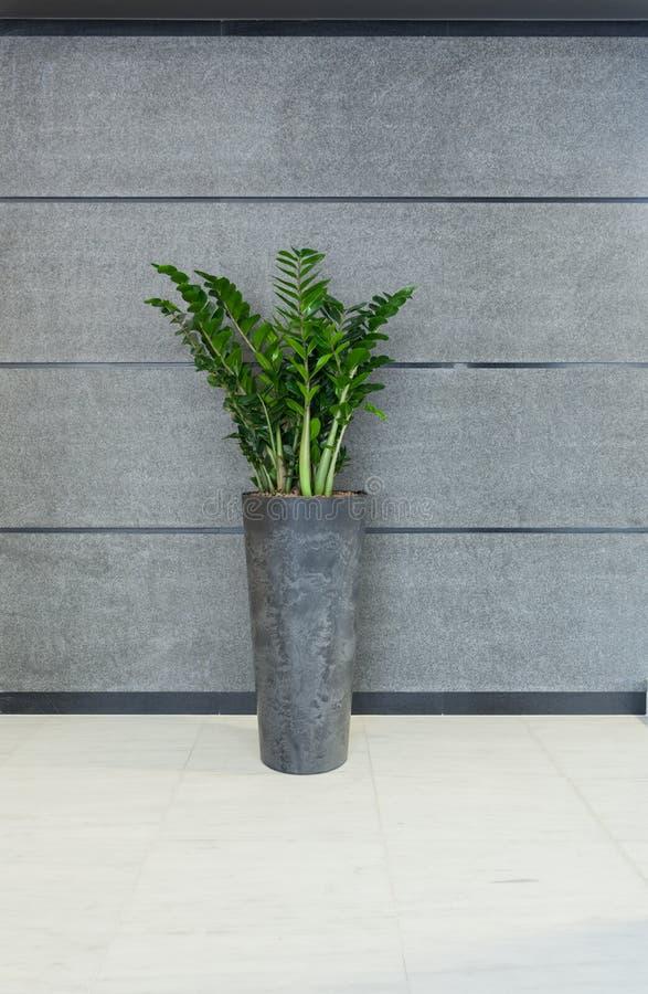 Vasi interni moderni vasi design esterno with vasi design esterno vasi da giardino con - Vasi interni moderni ...
