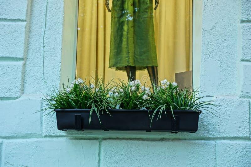 Vaso nero con le piante ornamentali ed i fiori bianchi sul davanzale della finestra della finestra con un manichino su un muro di fotografia stock