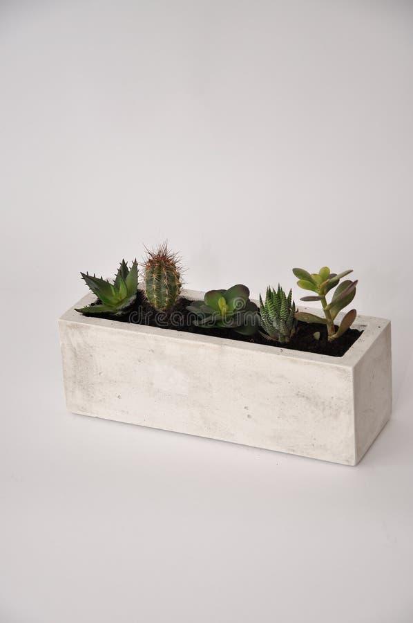 Vaso quadrato concreto della pianta con i succulenti immagini stock