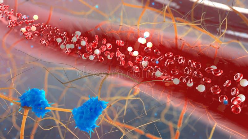 Vaso sanguíneo con los bloodcells que atraviesan stock de ilustración