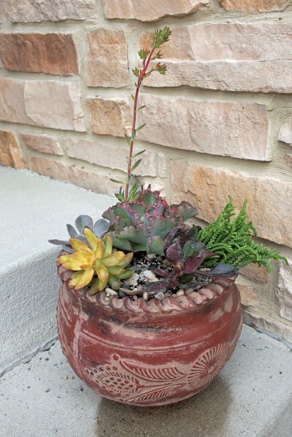 Vaso sudoccidentale dei succulenti variopinti fotografie stock