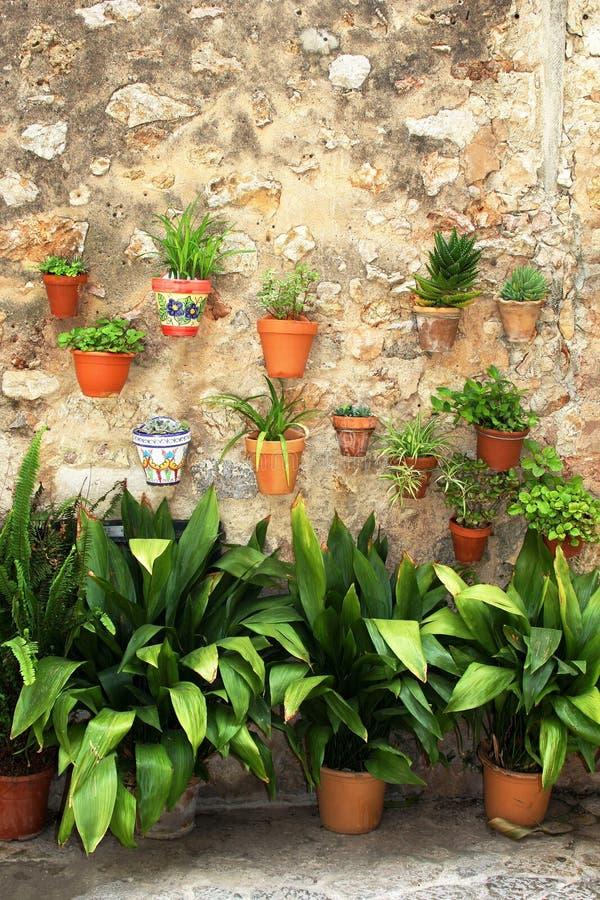 Vasos de flores mediterrâneos em uma parede rústica fotografia de stock