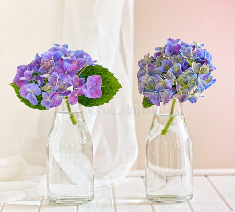 Vasos de vidro com hortênsias azuis fotos de stock