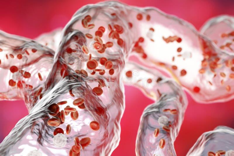 Vasos sanguíneos com glóbulos do fluxo ilustração royalty free