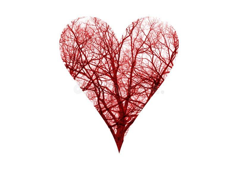 Vasos sanguíneos do símbolo do coração imagem de stock