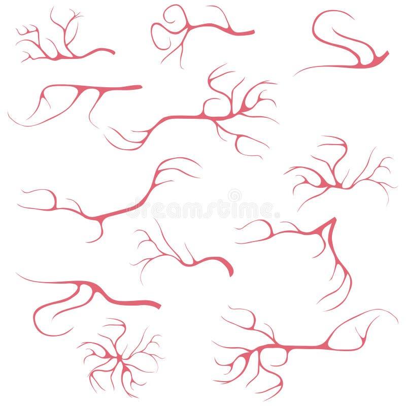 Vasos sanguíneos, um grupo de vasos sanguíneos realísticos capilares ilustração royalty free