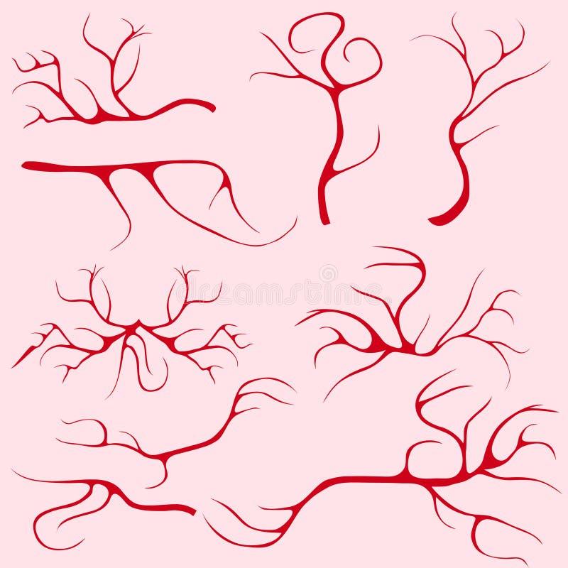 Vasos Sanguíneos Y Capilares Ilustración del Vector - Ilustración de ...