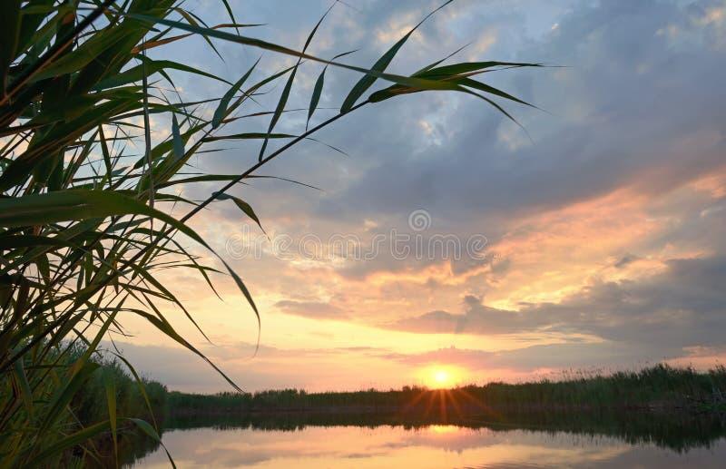 Vass mot solnedgången royaltyfri fotografi
