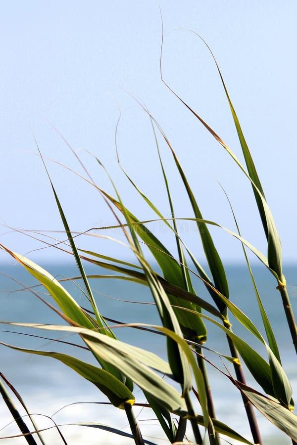 Vass vid havet fotografering för bildbyråer