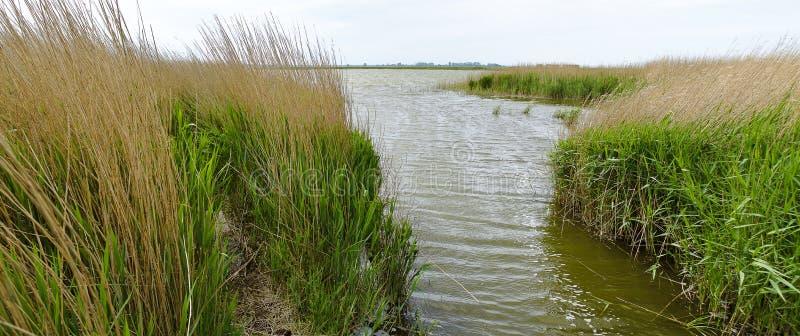 Vassbälte på lagun Zingster Bodden royaltyfria foton