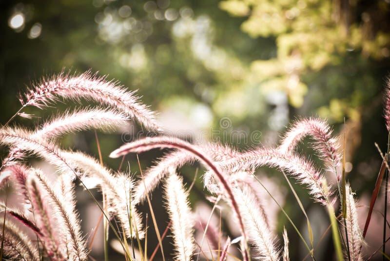 Vasser av gräs royaltyfria foton