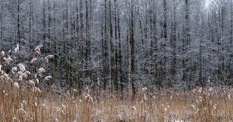 Vasser som täckas med snö arkivfoton