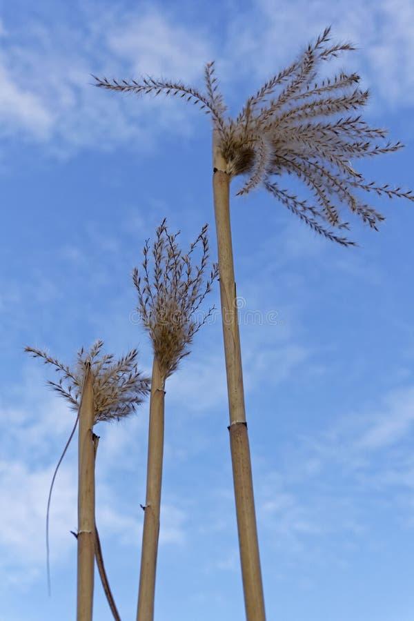 Vassväxt på en solig dag med blå himmel arkivbilder