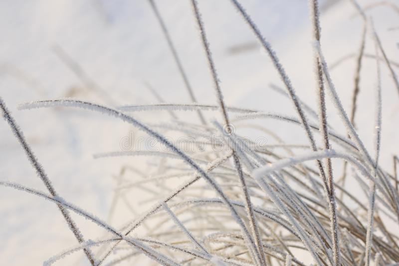 Vassväxter som täckas med rimfrost royaltyfri foto