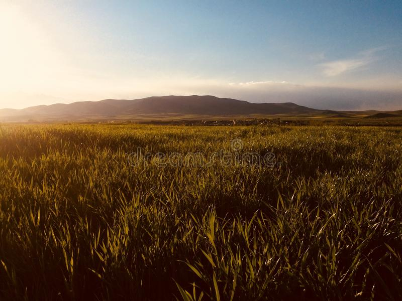 Vast Green Grass Fields With Silhouette of Mountain at Distance stock photo