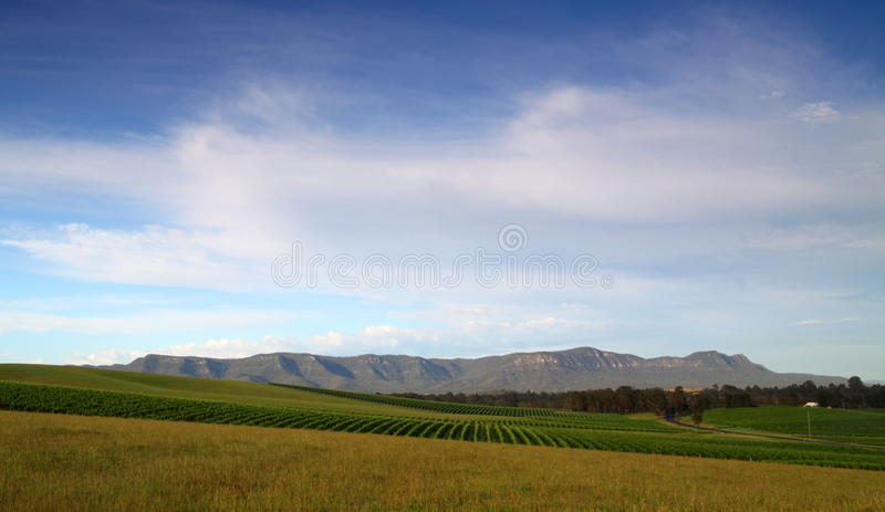 Vast green vineyards royalty free stock photography