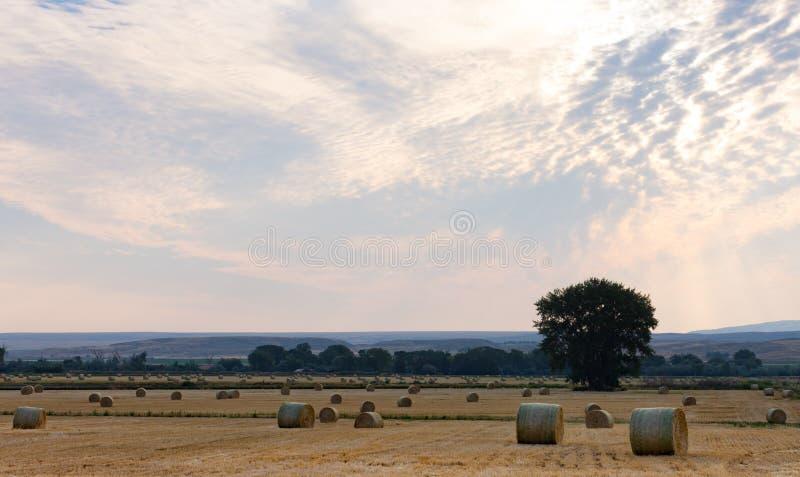 Vaste champ de Hay Bales photographie stock libre de droits