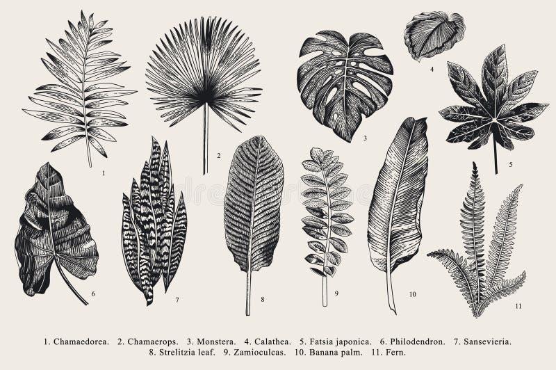Vastgesteld Blad exotics Uitstekende vector botanische illustratie stock illustratie