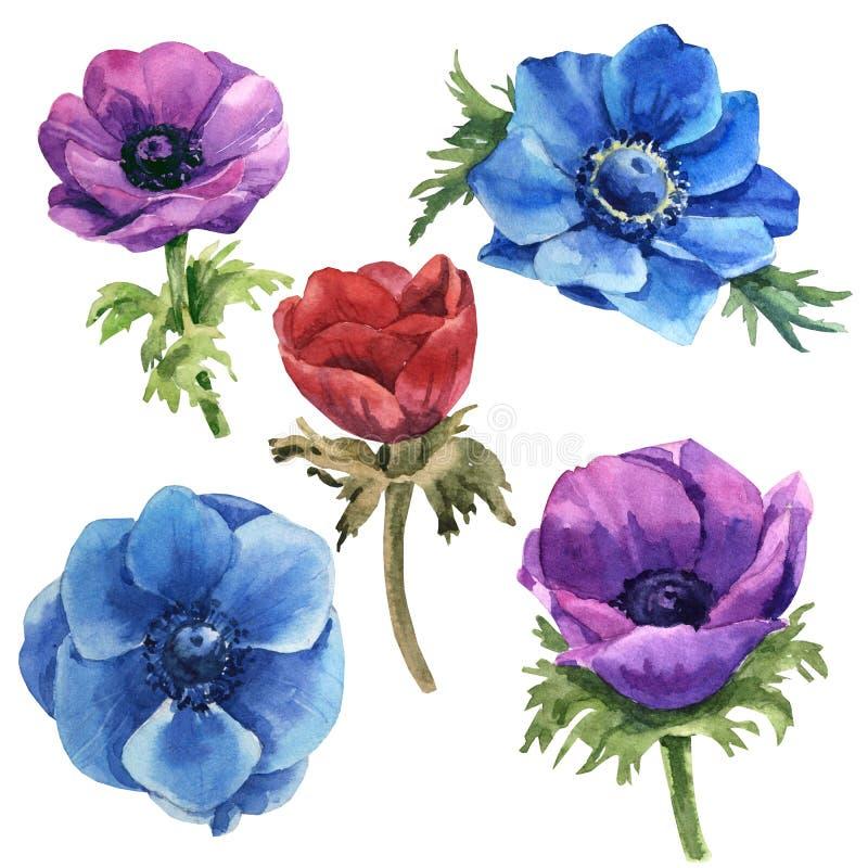 Vastgesteld violet de hemelblauw en rood van de waterverf multicolored anemoon stock illustratie