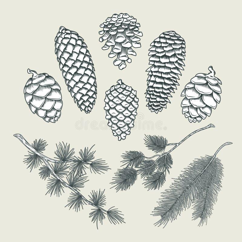 Vastgestelde botanische elementen - kegels en takken van pijnboom, sparren royalty-vrije illustratie