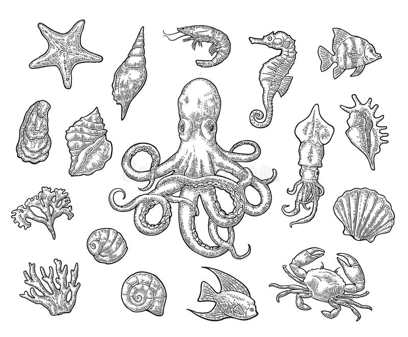 Vastgestelde overzeese dieren Shell, koraal, krab, garnalen, ster, vissen, octopus stock illustratie