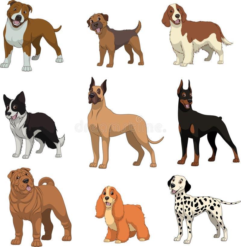 Vastgestelde rasechte dogsn vector illustratie