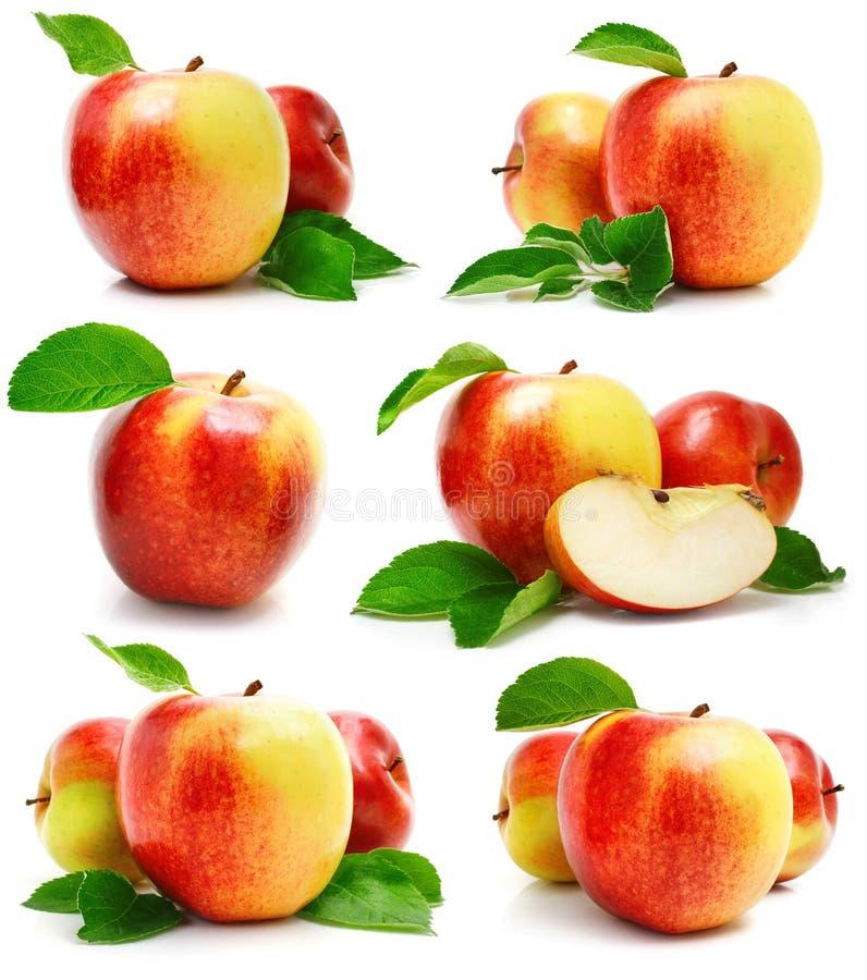 Vastgestelde rode appelvruchten met besnoeiing en groene bladeren stock afbeelding