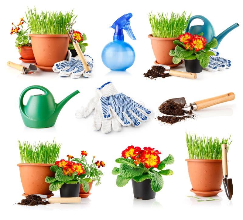 Vastgestelde tuingras en bloemen in de potten stock afbeelding