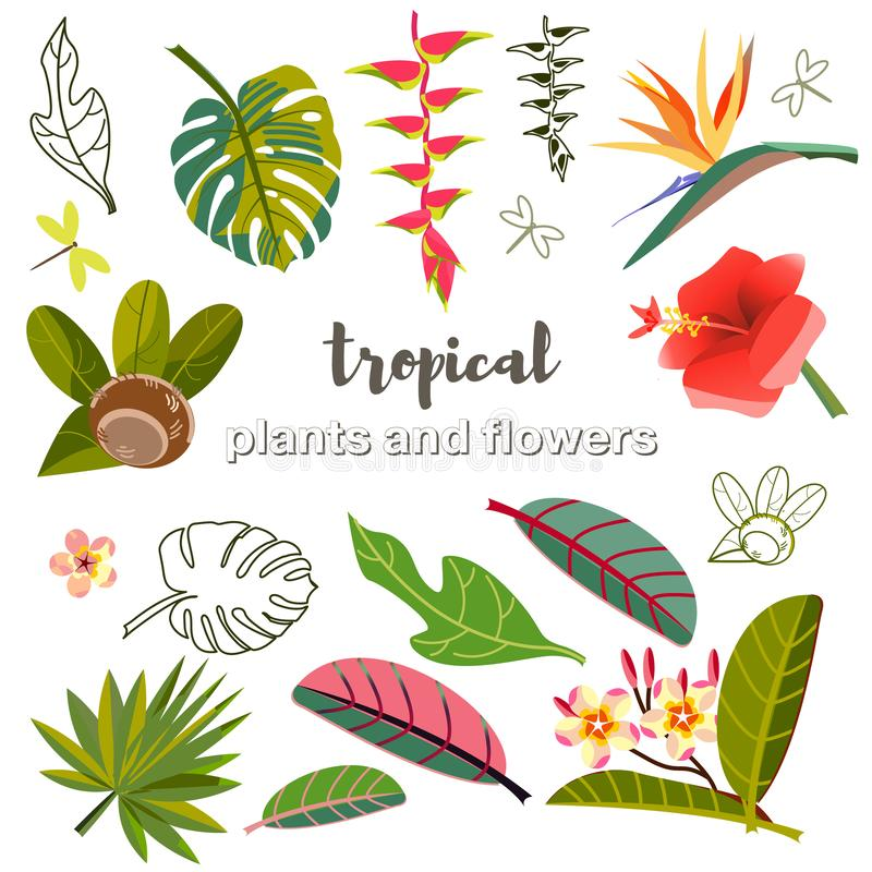 Vastgestelde vectorbeelden van bladeren, bloemen en vruchten stylization van Tropische installaties royalty-vrije illustratie