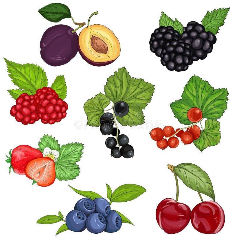 Vastgestelde wilde bessen en fruit vectorillustratie royalty-vrije illustratie