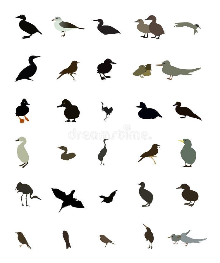 Vastgestelde zwart-witte silhouetten van vogels: duif, eend, meeuw stock illustratie