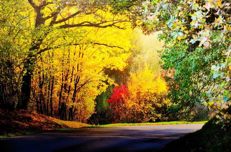 Vasti alberi variopinti della foglia con rosso e le foglie e la strada asfaltata colorate giallo all'autunno/alla luce del giorno immagini stock libere da diritti