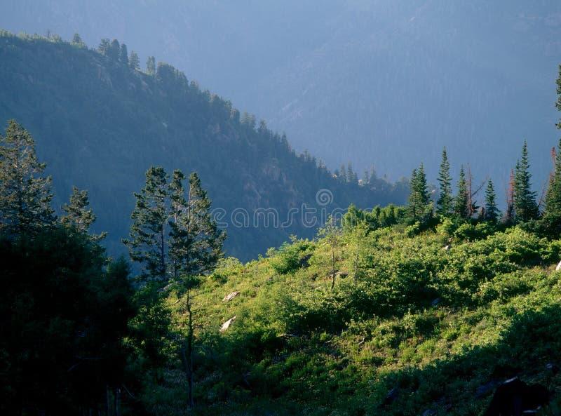 Vasto bacino delle forcelle, picchi gemellati regione selvaggia, foresta nazionale del Uinta-Wasatch-nascondiglio, gamma di Wasat fotografia stock libera da diritti