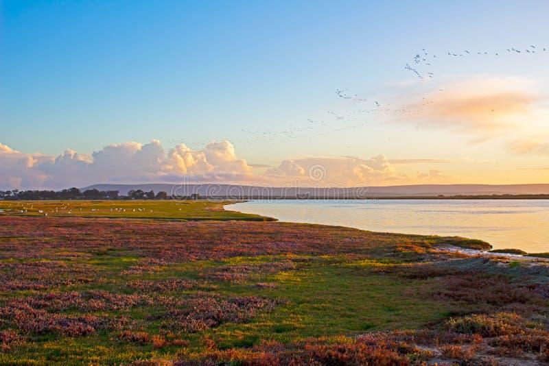 Vasto fiume con la poltiglia, le nuvole, il cielo e gli uccelli del sale immagini stock libere da diritti