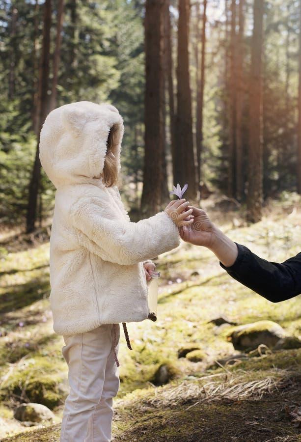 Vater gibt seinem kleinen Mädchen einen Blumenkrokus Vater und Tochter auf einer Bergwanderung, Kiefernwald mit Wildflowers lizenzfreie stockfotografie