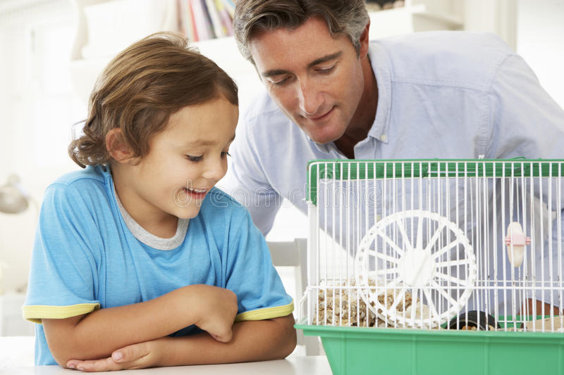 Vater-And Son Watching-Haustier-Hamster stockfoto