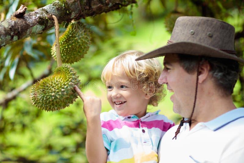 Vater- und Kindersammeln Durian vom Baum lizenzfreies stockbild