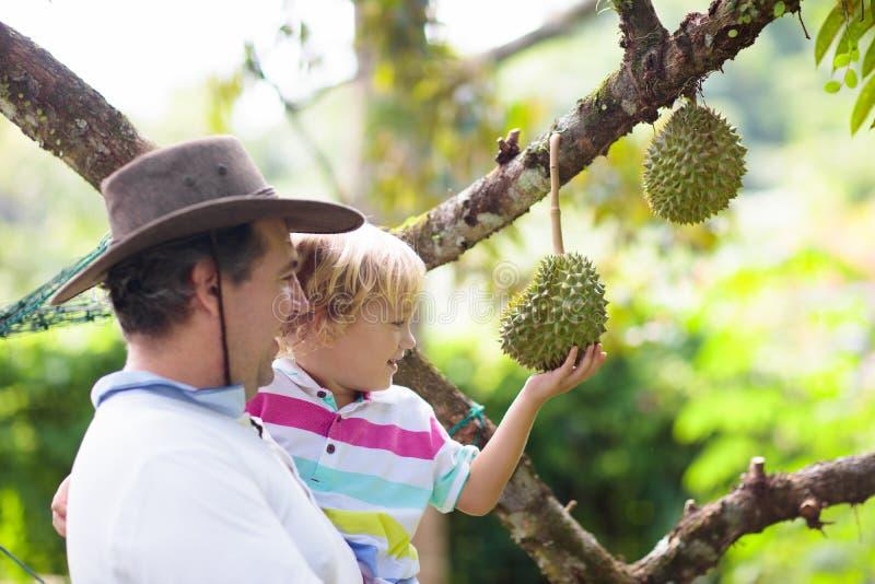 Vater- und Kindersammeln Durian vom Baum lizenzfreie stockfotos