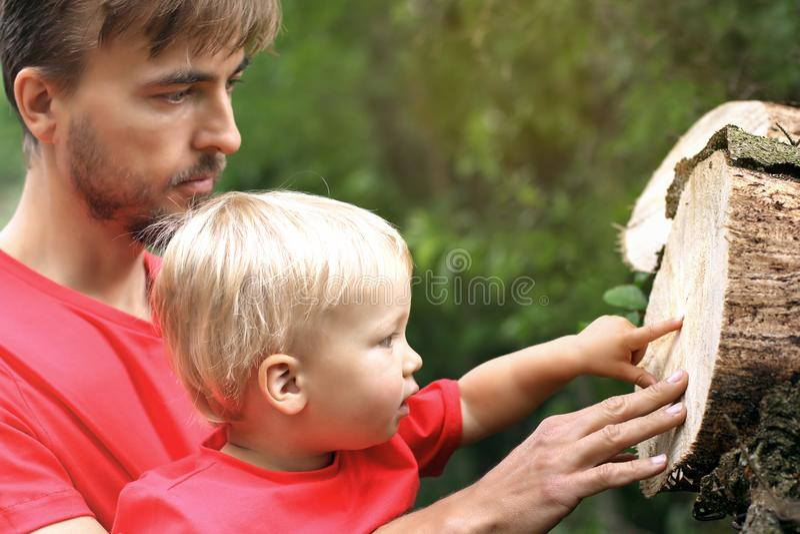Vater und sein Kleinkindsohn entdecken einen Querschnitt cuted tre stockfotografie