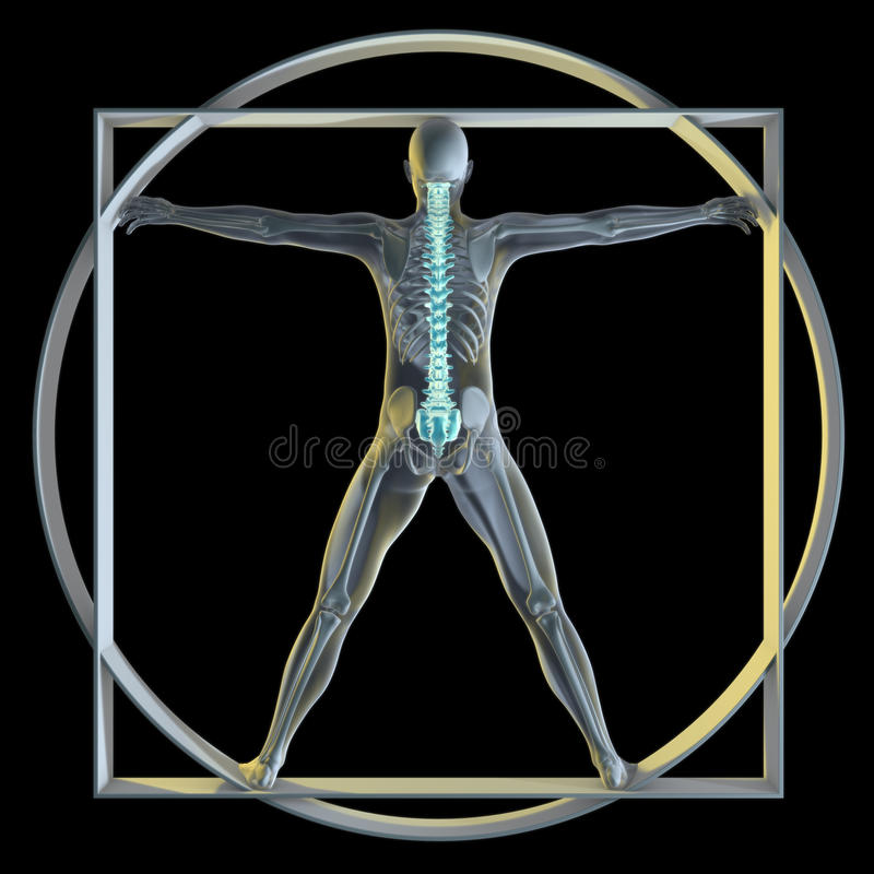 Vatruvian Man & Spine Stock Images