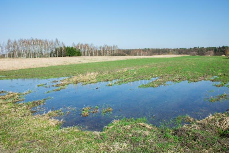 Vatten efter regn på ett grönt fält arkivbilder