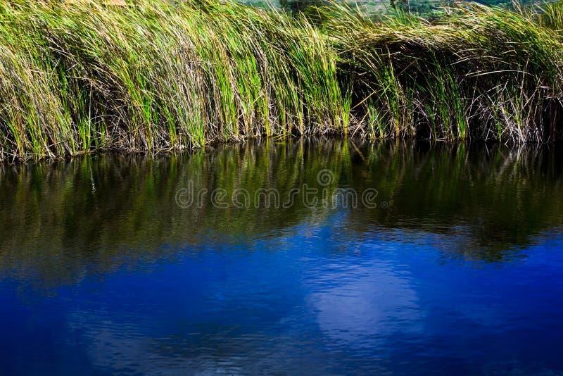vatten för 02 gräs royaltyfria bilder