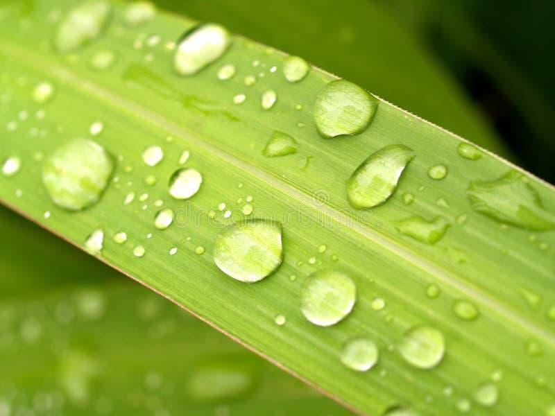 vatten för 06 droppe royaltyfri bild