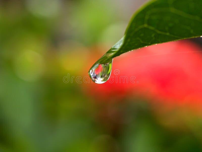 vatten för 09 droppe arkivfoton