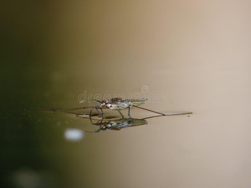 Vatten för dammreflexionsstriders