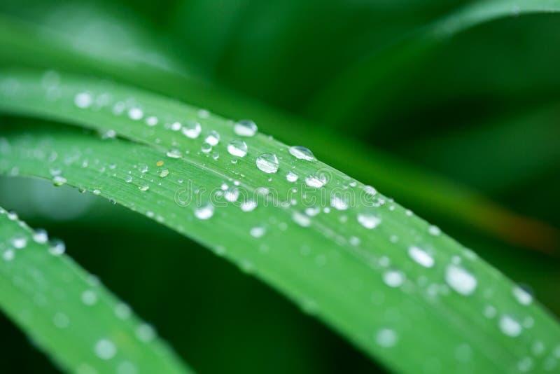 vatten för droppgräsgreen arkivfoton