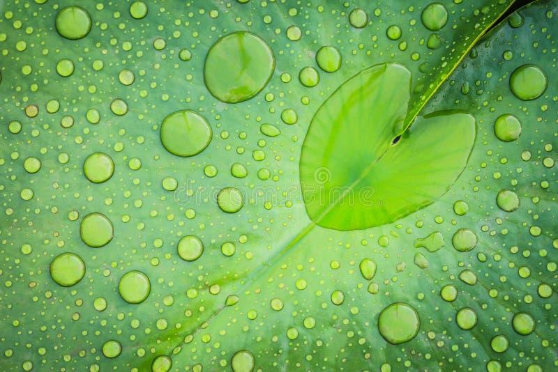 vatten för dropphjärtaform arkivfoton